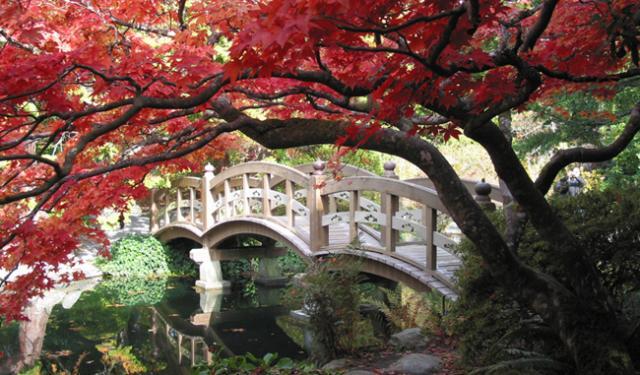 Caída del pelo en otoño y medicina china