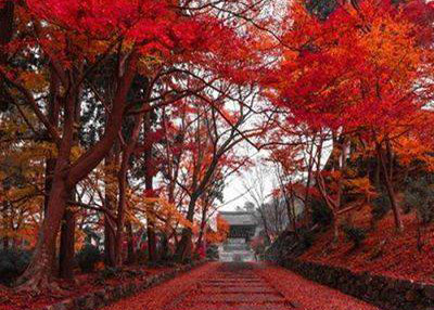 Consejos de otoño de medicina china