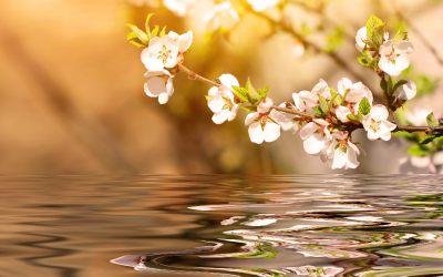 Consejos de la Primavera según la Medicina China