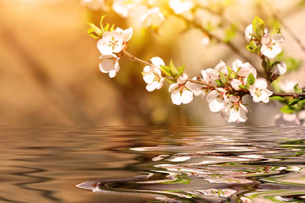 primavera medicina china
