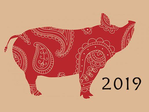 cerdo-tierra-2019