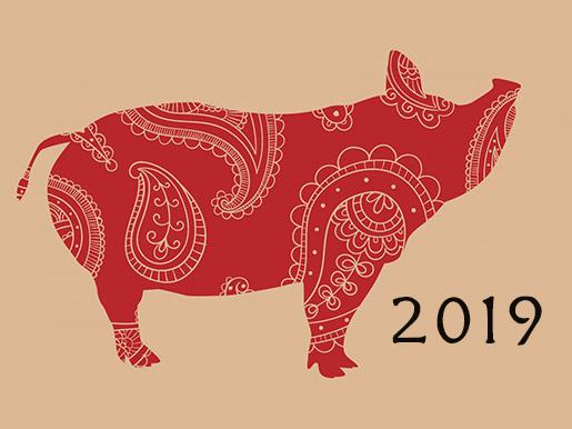 cerdo tierra 2019